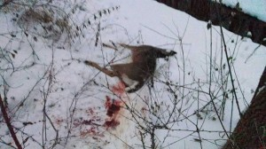 swhacker deer kill