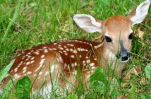 deer culling illinois dnr
