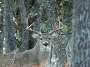 deer culling cwd