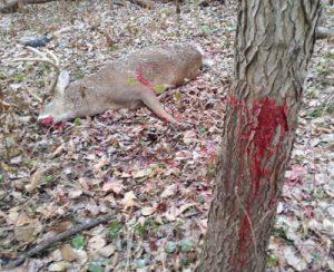 slick tricks blood trail