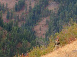 krissy knox elk hunting