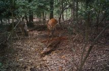 covert mpe6 trail camera