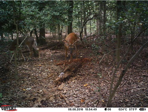 covert mpe6 buck photo