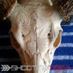 dremel deer skull art