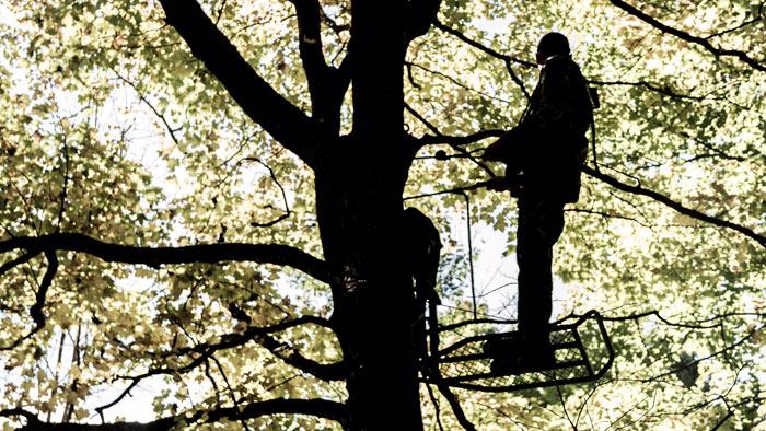 hunter safety treestand safety