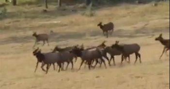 Calling All Elk!!
