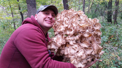 giant maitake mushroom